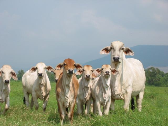 Bolivia: piden derogar cupos para exportar carnes