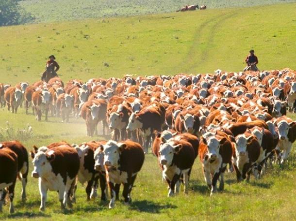 China: primer cliente en valor de la carne uruguaya