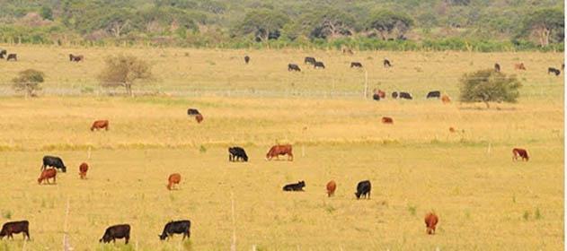 La ganadería frente al cambio de Gobierno