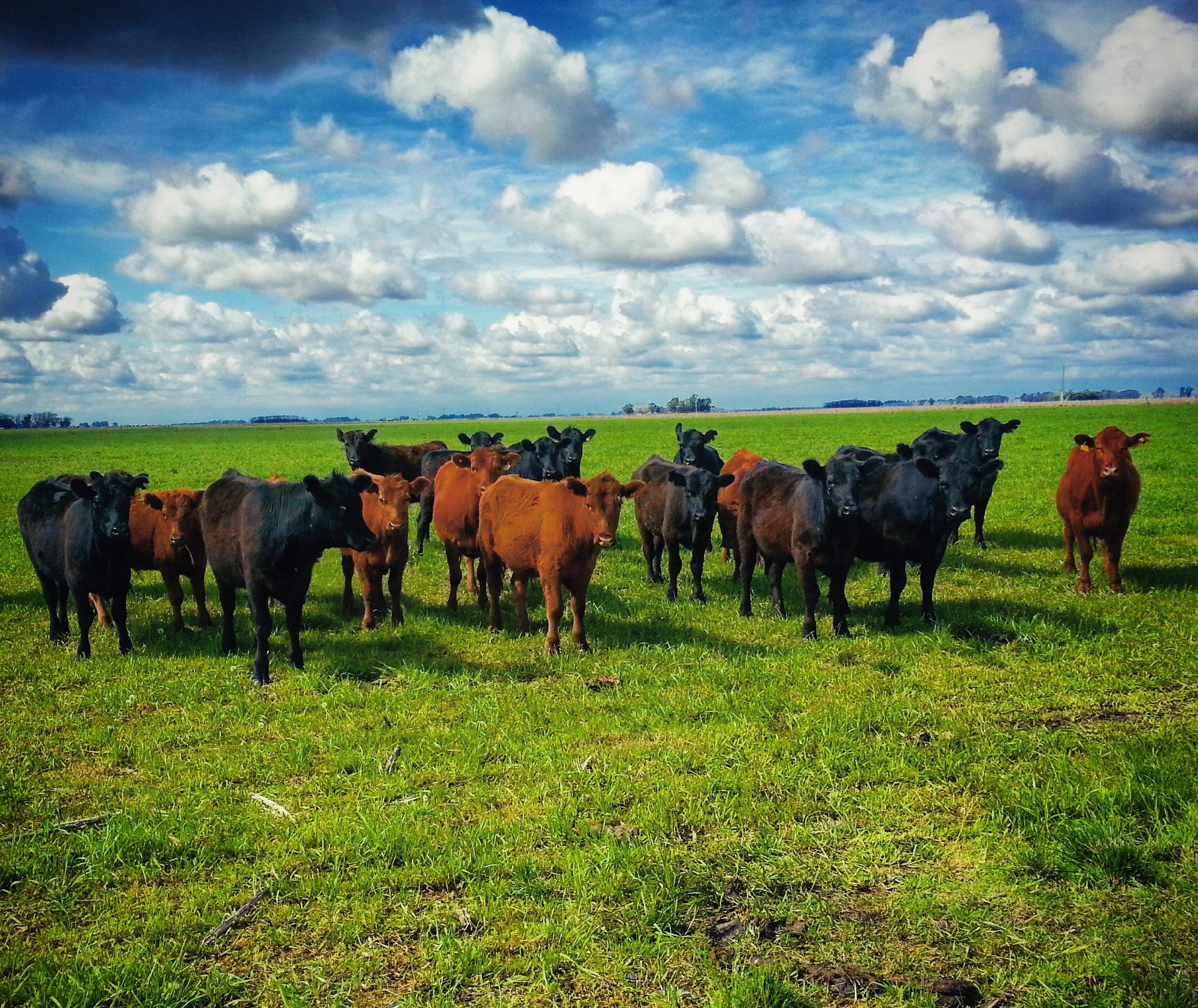 El impacto de la retención en el crecimiento del stock ganadero