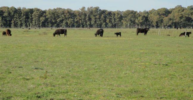 Implantación de pasturas en zonas no agrícolas