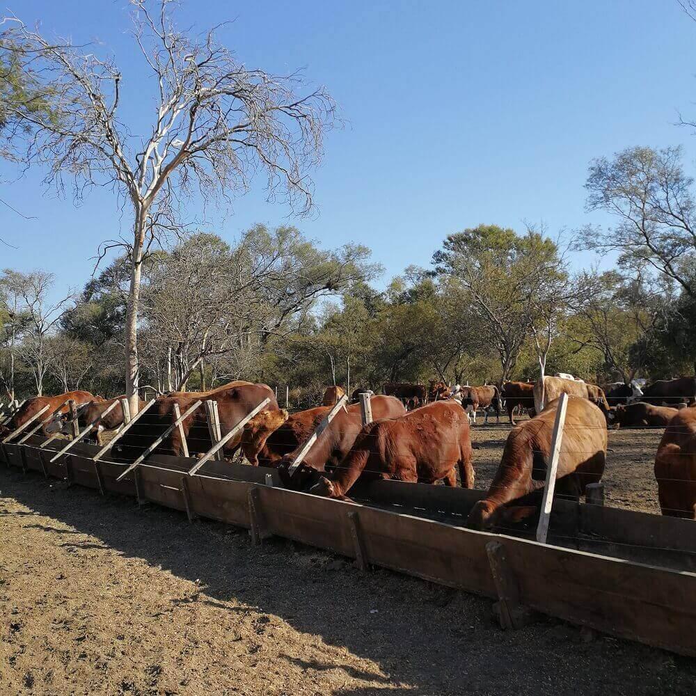 Bates comederos para feedlot en madera